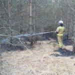 Včeraj gorelo na sedmih hektarih površin