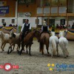 Center konjeniškega športa Celje gostil Svetovni pokal v preskakovanju ovir (foto, video)