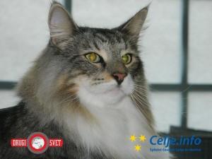 Na mačji razstavi se je predstavilo več kot 200 mačk različnih pasem.