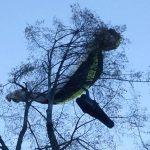 Jadralnega padalca pri Braslovčah reševali z drevesa (foto)