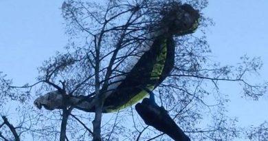 Jadralni padalec je bil ujet med vejami. Foto: PGD Dobrovlje.