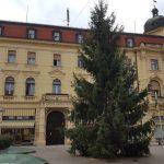 Božični smreki že stojita pred MO Celje in na Krekovem trgu
