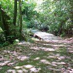 Najlepše pohodne poti v Celju in okolici: Laško in Dobrna skrivata prave bisere narave