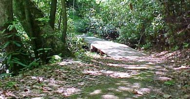 hiking_-trail_foot_bridge_3