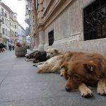 Pasji davek in seznama celjskih psov ter lastnikov