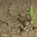 Kmetje imajo en teden časa, da prijavijo škodo po suši