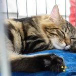 Občani opozarjajo: tudi v Celju vse več zapuščenih mačk