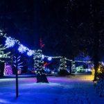 Oglejte si Božično bajko Slovenije – Mozirski gaj v soju 1.000.000 lučk