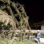 Močan veter na Celjskem podiral drevesa, razkrilo je tudi nekaj streh