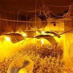 Na Vranskem zasegli več kot 500 sadik konoplje (foto)