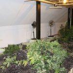 Žalčan imel v hiši na območju Šentjurja sodobno gojišče marihuane