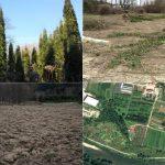 Drevesni park v Celju posekan za namen gojenja koruze (foto)
