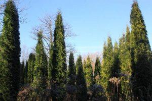drevesni-park1