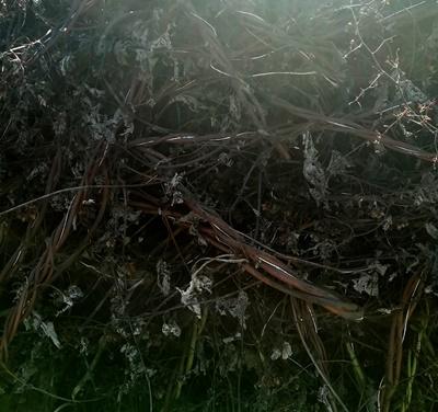 Plastične vrvice v hmeljskih odpadkih