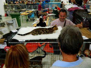 Mačke od blizu in daleč so se vtisnile v srca obiskovalcev.