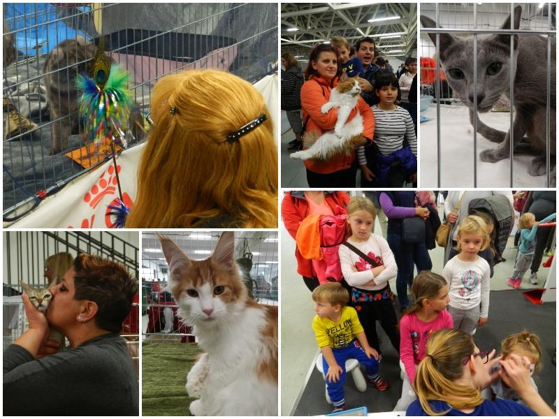 Razstava mačk je pritegnila veliko zanimanja.