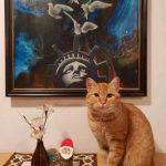 Razburljivo leto celjskega mačka Cinkarnarja (fotozgodba)