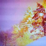 Eksplozija ob padcu drevesa na električni vodnik (video)