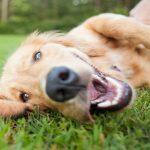 Zaskrbljujoči množični pogini psov zaradi zastrupitev v okolici Celja