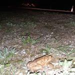 Kdo je odgovoren za masaker nad žabami pri ribniku Goričica? (foto)