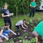 Člani Rotaract kluba Celje zasadili gredico medovitih rastlin (foto)