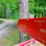 Izleti in pohodne poti v celjski regiji in okolici: naj planinska pot 2019 je Rečiška planinska krožna pot