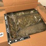 Celjski policisti zasegli 1500 sadik in 28 kilogramov posušene konoplje ter večji znesek gotovine