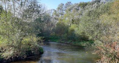 Sekanje obvodne vegetacije je poseg v naravo