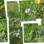Šolarji spoznavali svet rastlin (foto)