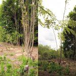 Ponovno uničevanje drevesnega parka v Celju