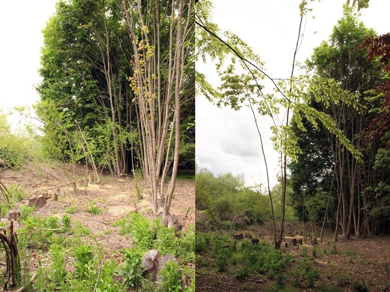 drevesni-park