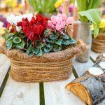 Prihod pomladi v Citycenter Celje s tradicionalno razstavo cvetja