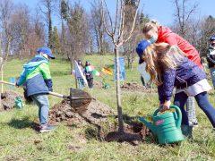 Sadna drevesa, šole