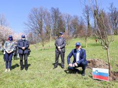 Sadna drevesa, župan in predstavnik Uefe