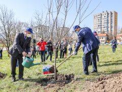 Sadna drevesa, sajenje, župan,Uefa
