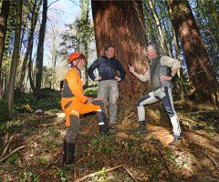 4 foto Andraž Purg – Merilci najvišjega drevesa v Sloveniji (z leve) Rado Nadvešnik, mag. Robert Hostnik, in Robert Hedl