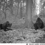 Medvedje naj bi svoj »izlet« na Celjskem že zaključili, a previdnost v gozdu vseeno ni odveč, saj ponovni obisk ni nemogoč